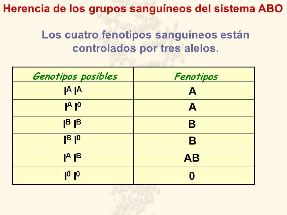 Herencia de los grupos sanguíneos del sistema ABO Los cuatro fenotipos sanguíneos están controlados por tres alelos. Genotipos posibles Fenotipos I A