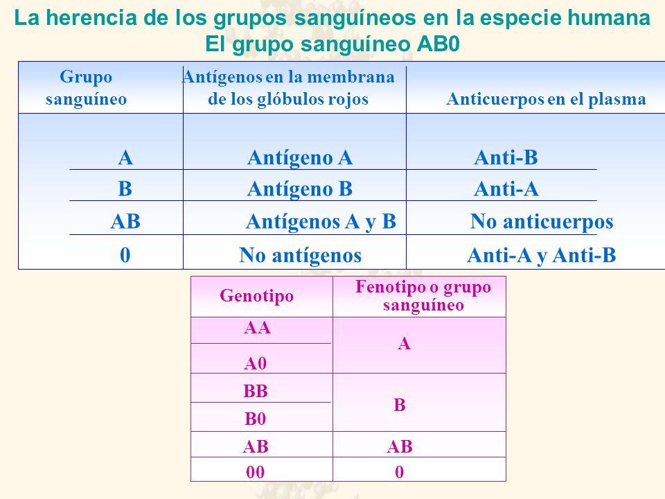 La herencia de los grupos sanguíneos en la especie humana El grupo sanguíneo AB0 Grupo sanguíneo Antígenos en la membrana de los glóbulos rojos Anticuerpos en el plasma A B AB 0 Antígeno A Antígeno B No antígenos Antígenos A y B Anti-A Anti-B Anti-A y Anti-B No anticuerpos Genotipo Fenotipo o grupo sanguíneo AA A0 B0 BB AB 00 A B AB 0