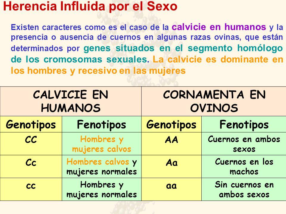 Herencia Influida por el Sexo Existen caracteres como es el caso de la calvicie en humanos y la presencia o ausencia de cuernos en algunas razas ovina