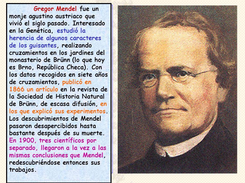Gregor Mendel fue un monje agustino austriaco que vivió el siglo pasado. Interesado en la Genética, estudió la herencia de algunos caracteres de los g