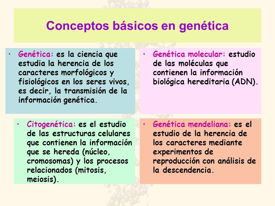 Conceptos básicos en genética Genética: es la ciencia que estudia la herencia de los caracteres morfológicos y fisiológicos en los seres vivos, es dec