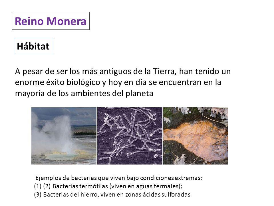 Reino Monera Hábitat A pesar de ser los más antiguos de la Tierra, han tenido un enorme éxito biológico y hoy en día se encuentran en la mayoría de lo
