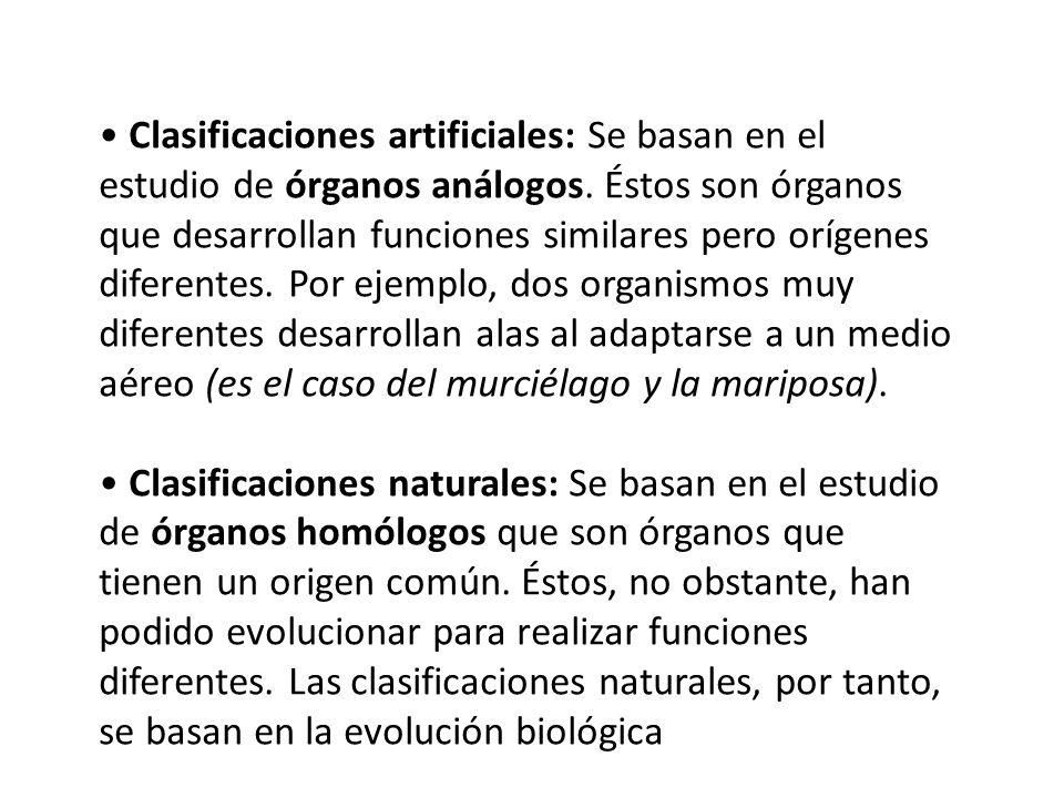 Clasificaciones artificiales: Se basan en el estudio de órganos análogos. Éstos son órganos que desarrollan funciones similares pero orígenes diferent