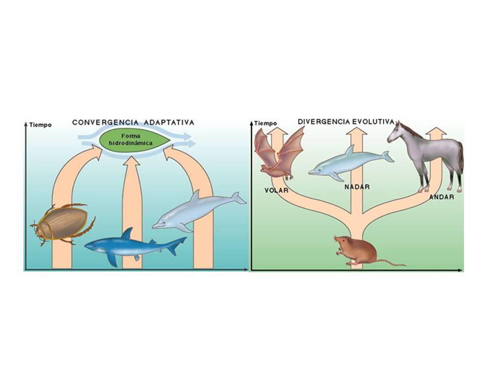 En dos continentes diferentes pueden encontrar dos especies de ranas distintas.
