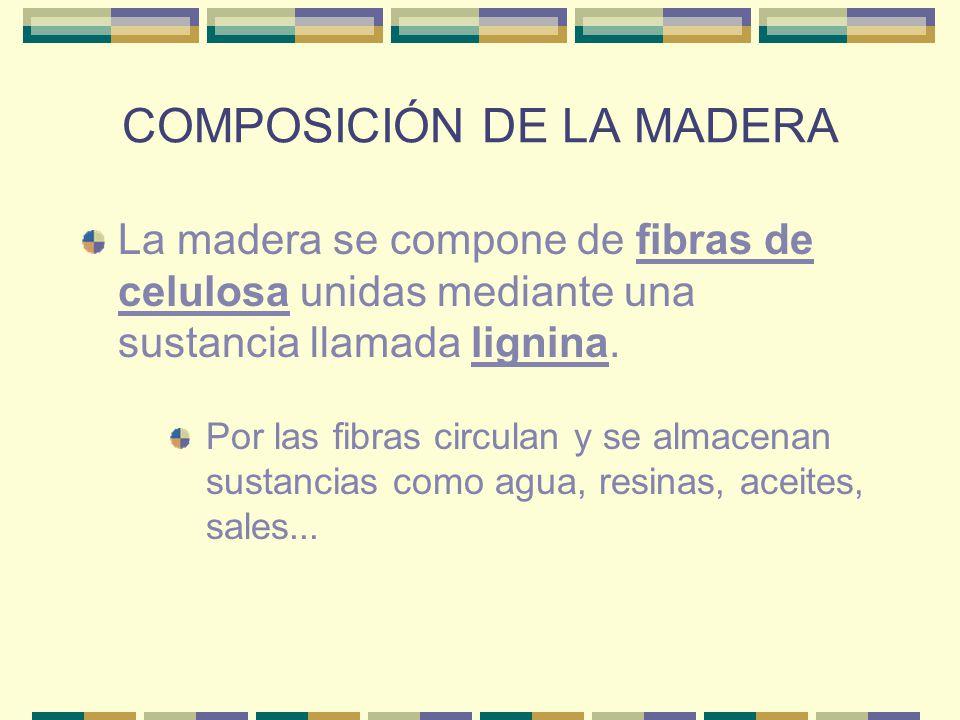 COMPOSICIÓN DE LA MADERA La madera se compone de fibras de celulosa unidas mediante una sustancia llamada lignina. Por las fibras circulan y se almace