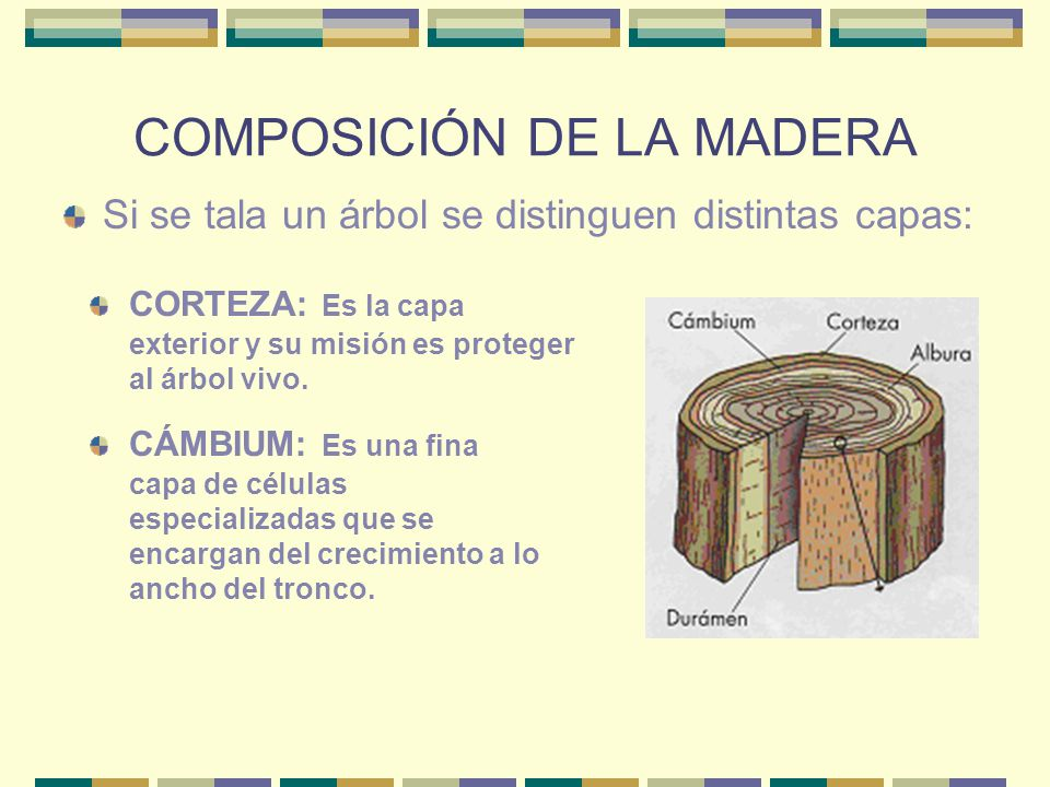 COMPOSICIÓN DE LA MADERA Si se tala un árbol se distinguen distintas capas: CORTEZA: Es la capa exterior y su misión es proteger al árbol vivo. CÁMBIU