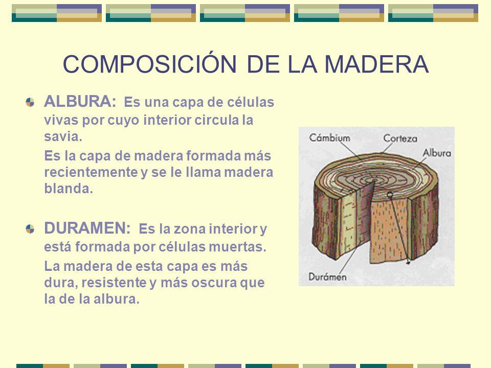 COMPOSICIÓN DE LA MADERA ALBURA: Es una capa de células vivas por cuyo interior circula la savia. Es la capa de madera formada más recientemente y se