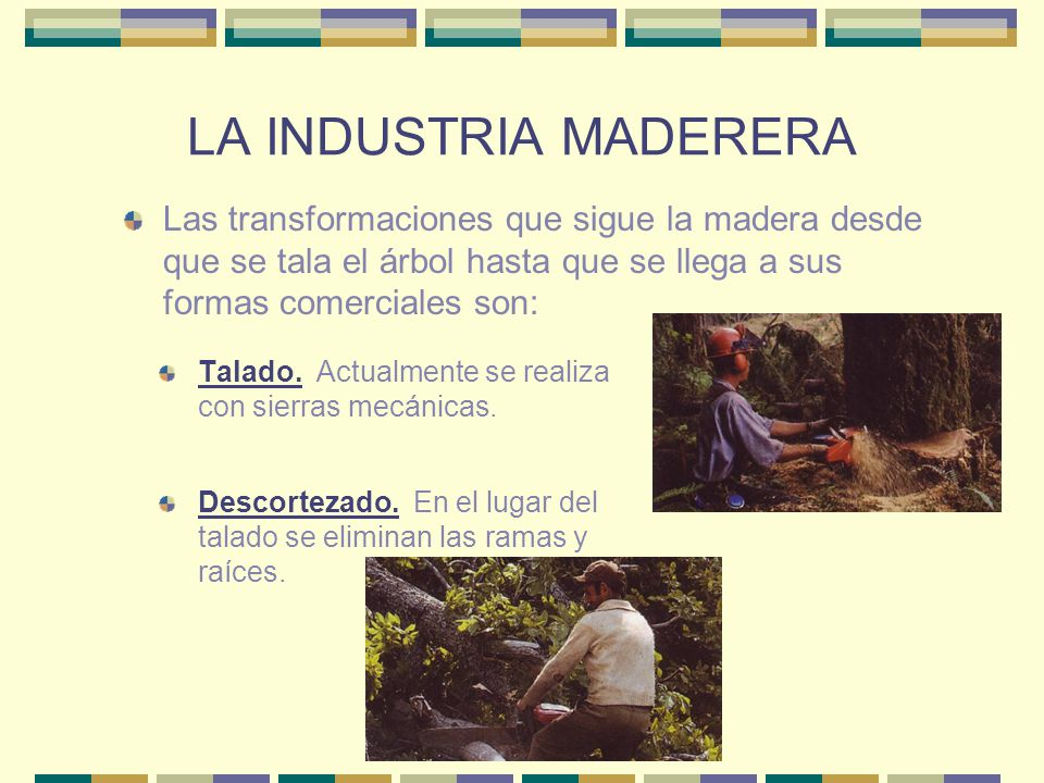 LA INDUSTRIA MADERERA Talado. Actualmente se realiza con sierras mecánicas. Las transformaciones que sigue la madera desde que se tala el árbol hasta