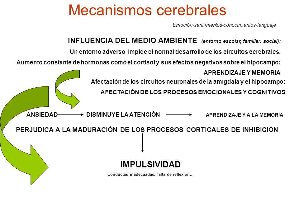 Mecanismos cerebrales Emoción-sentimientos-conocimientos-lenguaje INFLUENCIA DEL MEDIO AMBIENTE (entorno escolar, familiar, social): Un entorno advers