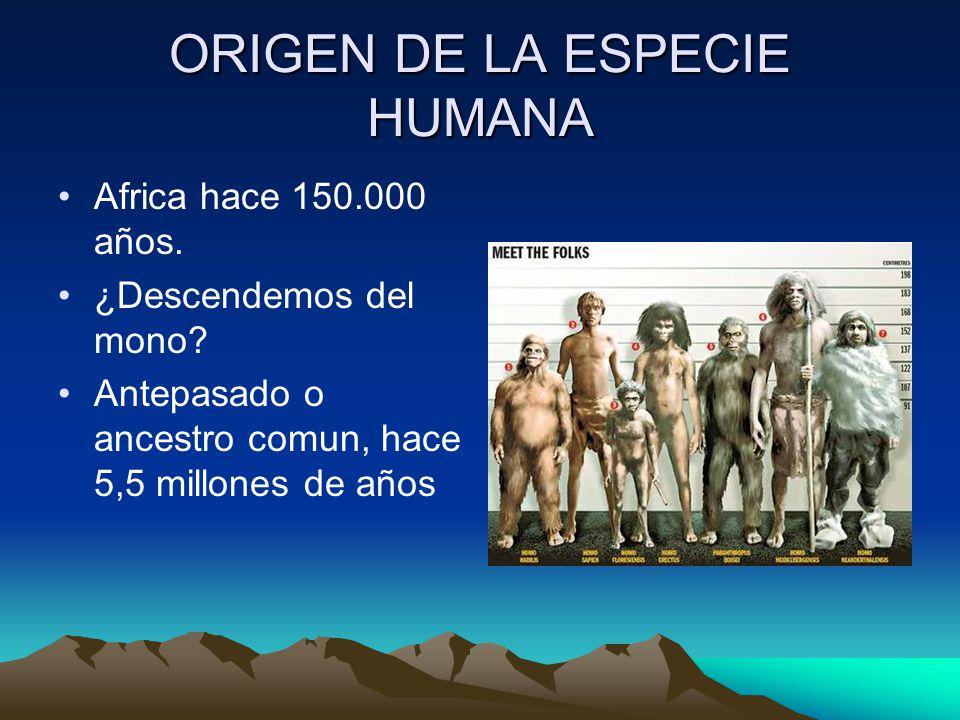 ORIGEN DE LA ESPECIE HUMANA Africa hace 150.000 años. ¿Descendemos del mono? Antepasado o ancestro comun, hace 5,5 millones de años