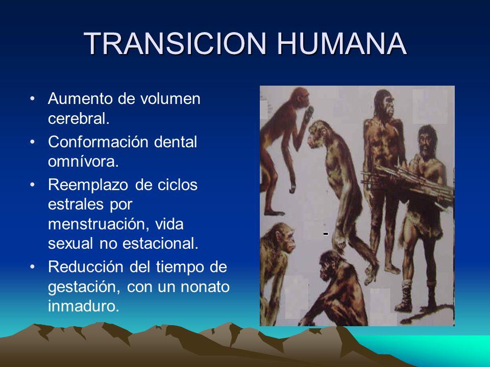 TRANSICION HUMANA Aumento de volumen cerebral. Conformación dental omnívora. Reemplazo de ciclos estrales por menstruación, vida sexual no estacional.