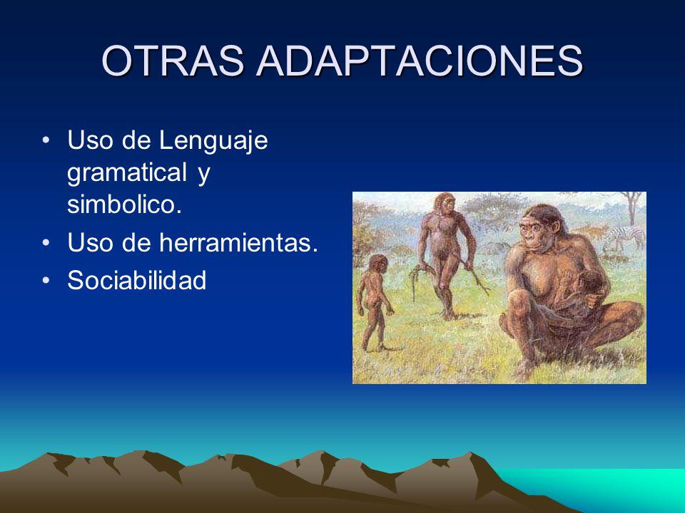 OTRAS ADAPTACIONES Uso de Lenguaje gramatical y simbolico. Uso de herramientas. Sociabilidad