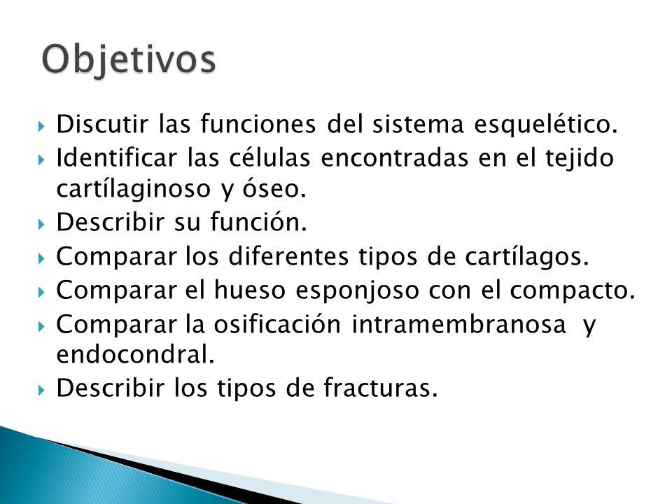 Es un tipo de tejido conectivo especializado en que la matriz extracelular tiene una consistencia relativamente rígida, pero flexible.