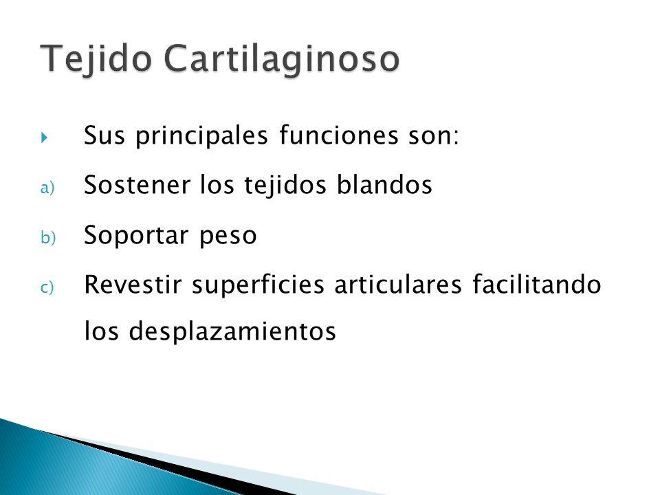 Constituyentes: 1.Células: Condrogénicas. Condroblastos Condrocitos 2.