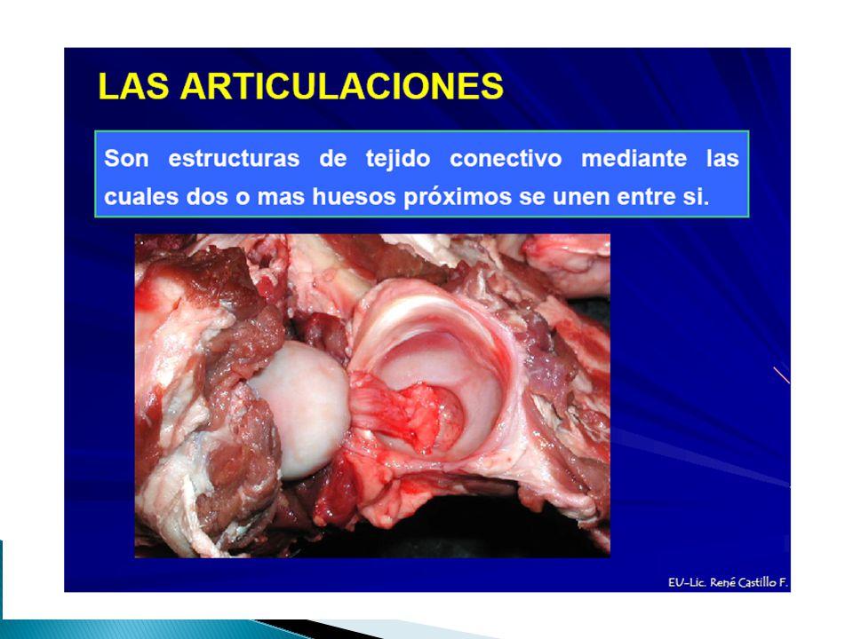 Clasificación de acuerdo con el grado del movimiento que se lleva a cabo entre los huesos de la articulación.