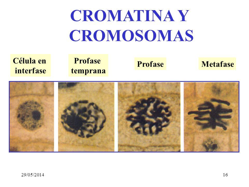 Theodore Boveri and William Sutton-- 1902 LOS GENES ESTABAN EN LOS CROMOSOMAS !!! 29/05/201415