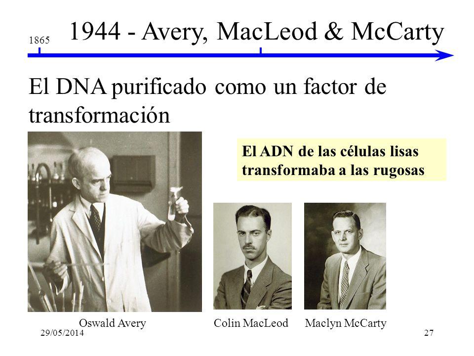 1865 1928 - Frederick Griffith bacteria Inyección Resultados Células L vivas Células R vivas Células L muertas por calor Células L muertas por calor j
