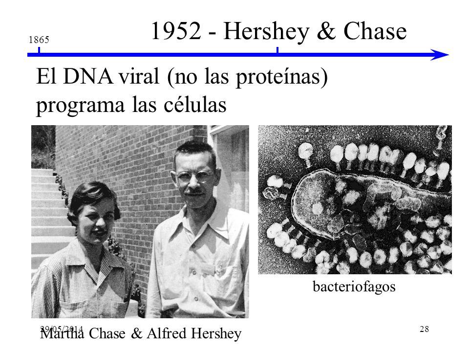 1865 1944 - Avery, MacLeod & McCarty El DNA purificado como un factor de transformación Oswald AveryColin MacLeodMaclyn McCarty El ADN de las células