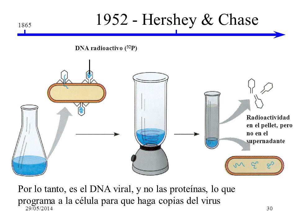 1865 1952 - Hershey & Chase fago T2 Bacteria Proteínas radioactivas ( 35 S) El fago radioactivo infecta las células bacteriales Se separan las cubiert