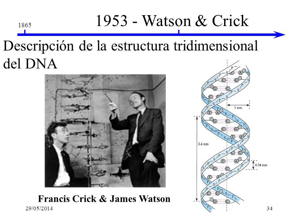 1865 1953 - Franklin & Wilkins La naturaleza helicoidal del DNA Fuente de rayos X DNA cristalizado Rosalind Franklin Maurice Wilkins Film fotográfico