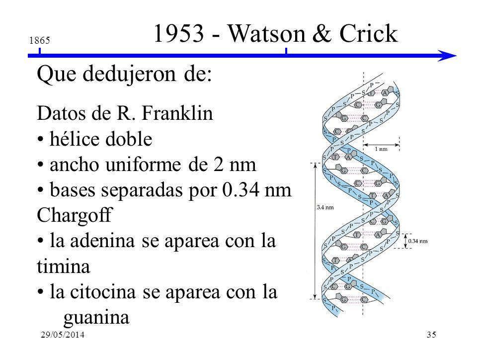 1953 - Watson & Crick 1865 Descripción de la estructura tridimensional del DNA Francis Crick & James Watson 29/05/201434