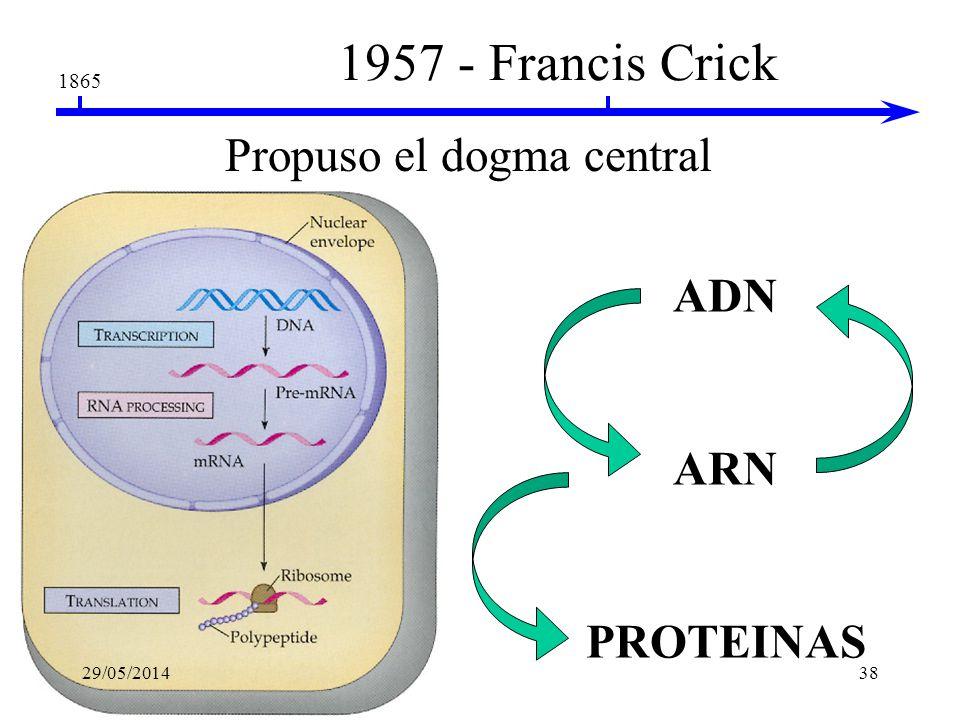 La replicación del DNA es semiconservativa 29/05/201437
