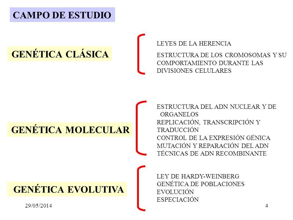 Las leyes de la herencia Base física de los rasgos Variación y evolución de los rasgos Que estudia la genética? 29/05/20143