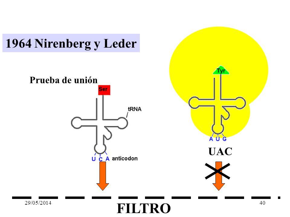 1961 Nirenberg y Ochoa Polinucleótido fosforilasa Sistema libre de células UUUUUUUU fenilalanina AAAAAAAAlisina CCCCCCCCprolina GGGGGGGglicina 29/05/2