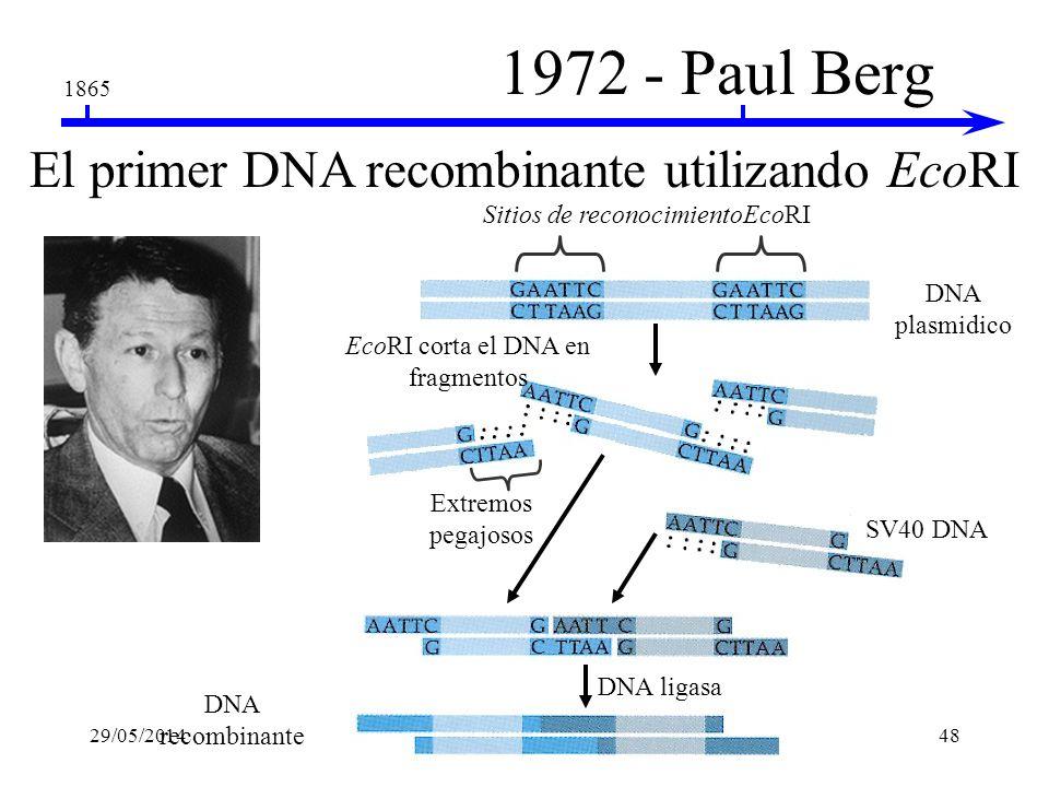 1865 1970 - Smith & Nathans Descubrimiento de las enzimas de restricción Hamilton Smith Descubrió HindII en Haemophilus influenzae Daniel Nathans Util