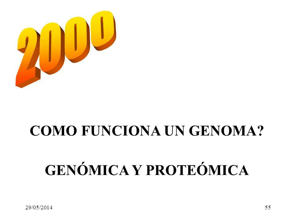 1865 1995 primer genoma: Hemophilus influenzae. 1996 Genoma de Saccharomyces cerevisiae 1997 Se clona Dolly 1998 Genoma de C. elegans LOS 90: GENOMAS