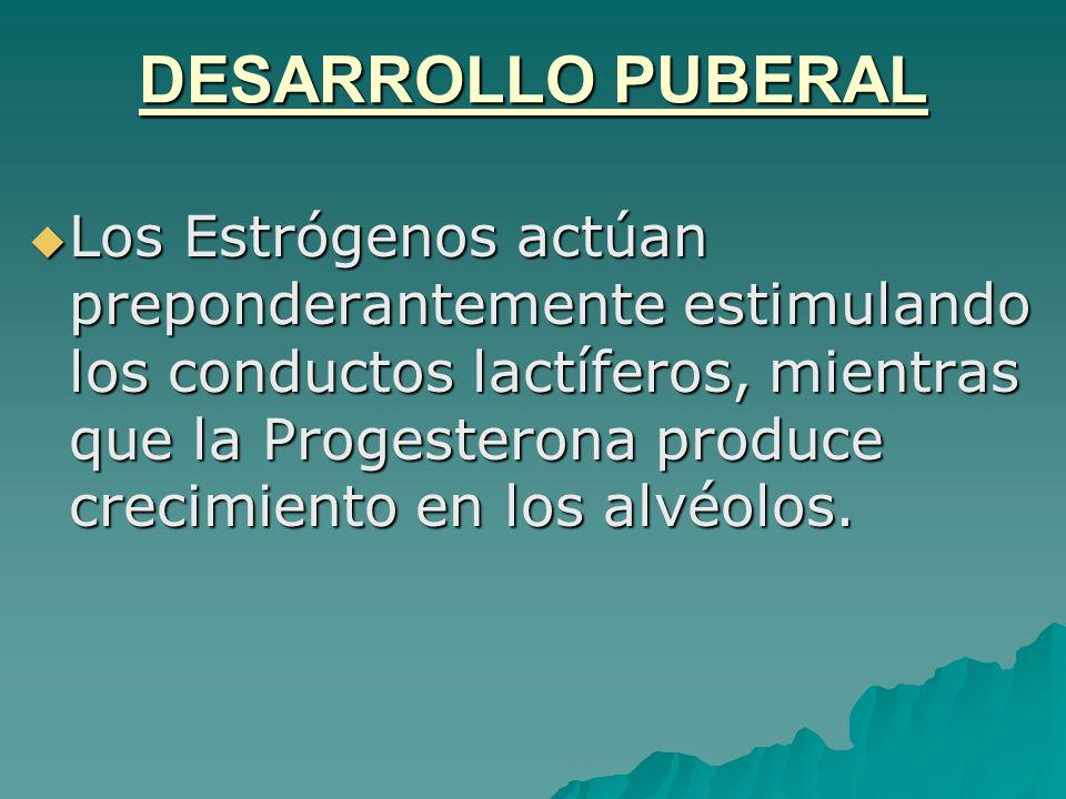 DESARROLLO PUBERAL Los Estrógenos actúan preponderantemente estimulando los conductos lactíferos, mientras que la Progesterona produce crecimiento en