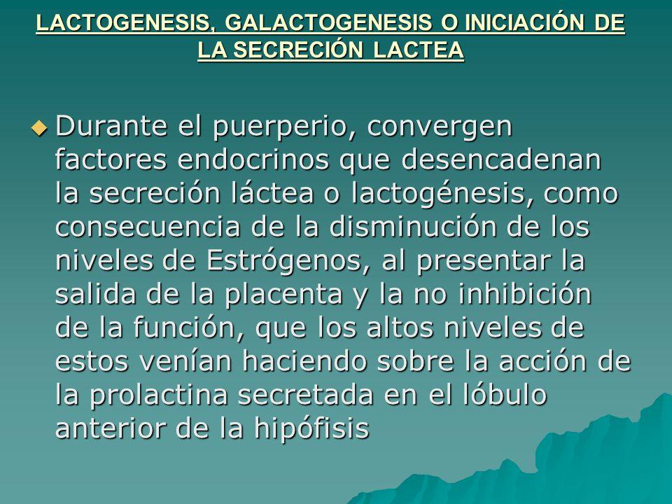 LACTOGENESIS, GALACTOGENESIS O INICIACIÓN DE LA SECRECIÓN LACTEA Durante el puerperio, convergen factores endocrinos que desencadenan la secreción lác