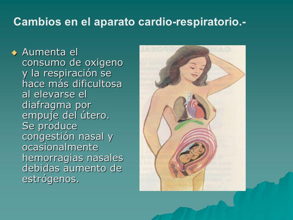 Aumenta el consumo de oxigeno y la respiración se hace más dificultosa al elevarse el diafragma por empuje del útero. Se produce congestión nasal y oc