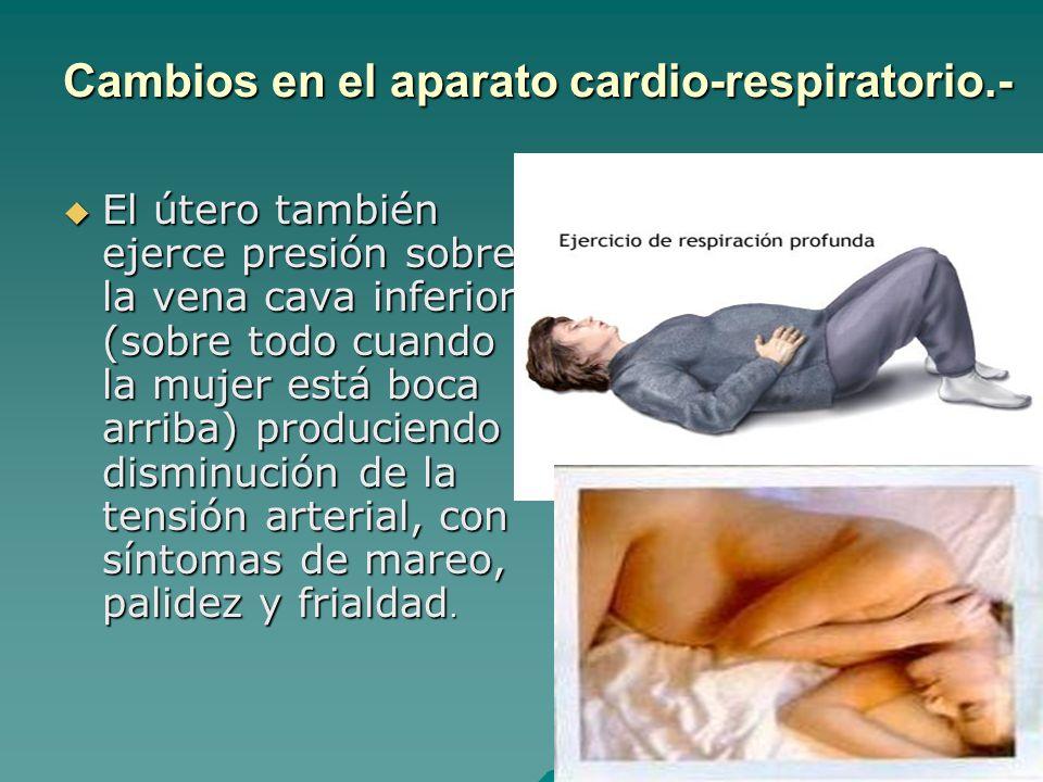 El útero también ejerce presión sobre la vena cava inferior (sobre todo cuando la mujer está boca arriba) produciendo disminución de la tensión arteri
