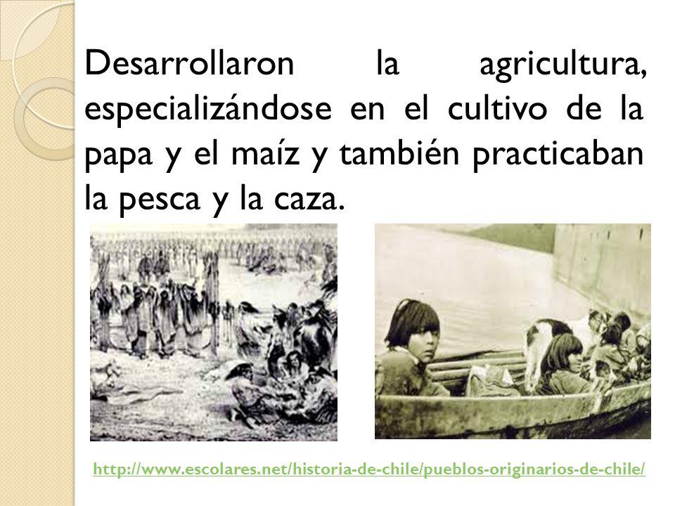 Desarrollaron la agricultura, especializándose en el cultivo de la papa y el maíz y también practicaban la pesca y la caza.