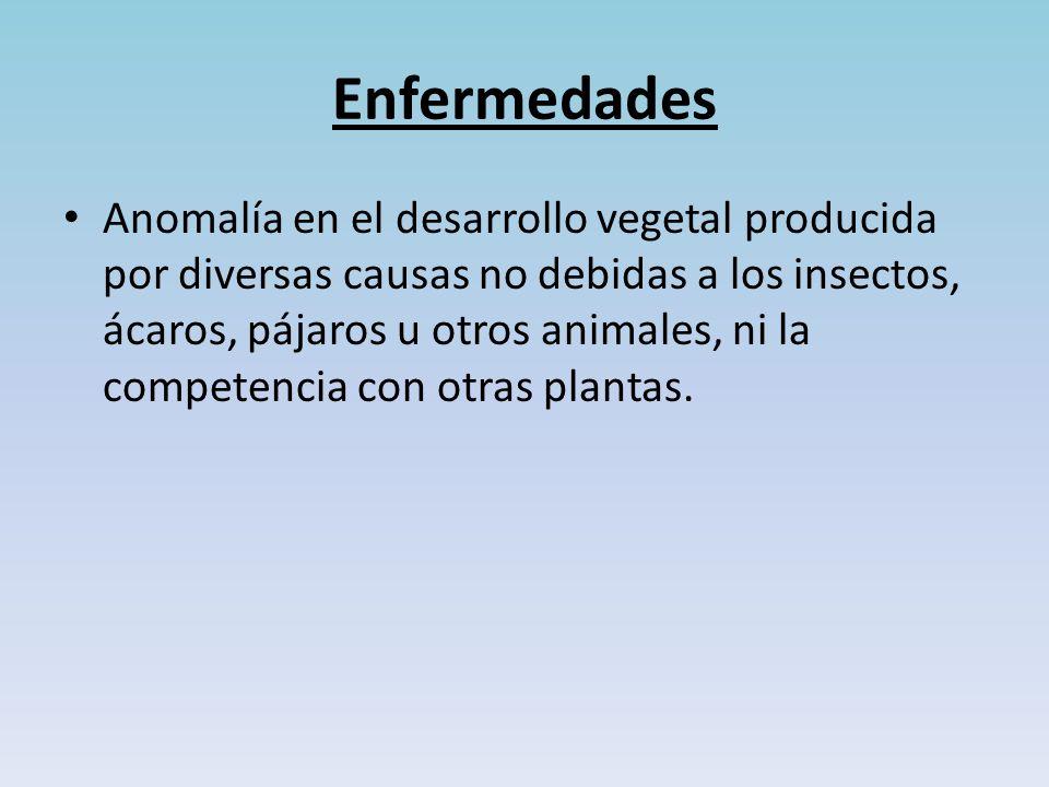 Enfermedades Anomalía en el desarrollo vegetal producida por diversas causas no debidas a los insectos, ácaros, pájaros u otros animales, ni la competencia con otras plantas.