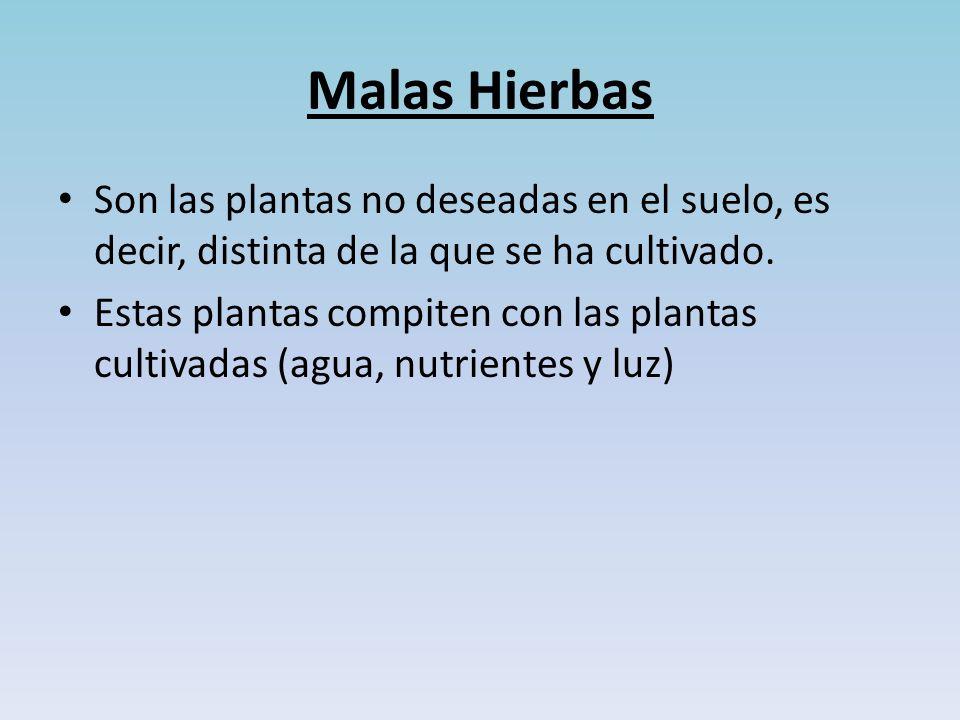 Malas Hierbas Son las plantas no deseadas en el suelo, es decir, distinta de la que se ha cultivado.