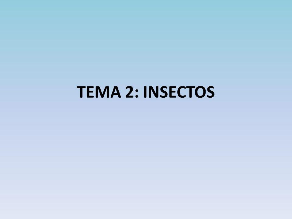 TEMA 2: INSECTOS