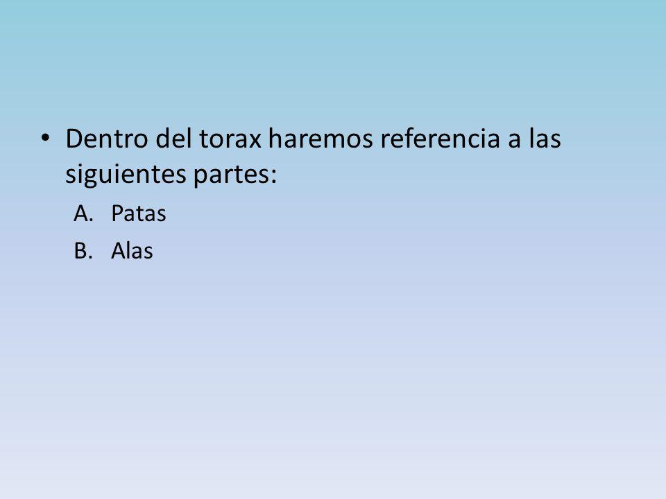 Dentro del torax haremos referencia a las siguientes partes: A.Patas B.Alas