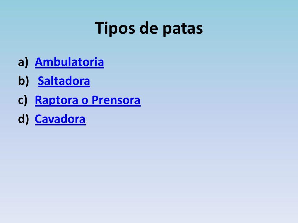 Tipos de patas a)AmbulatoriaAmbulatoria b) SaltadoraSaltadora c)Raptora o PrensoraRaptora o Prensora d)CavadoraCavadora