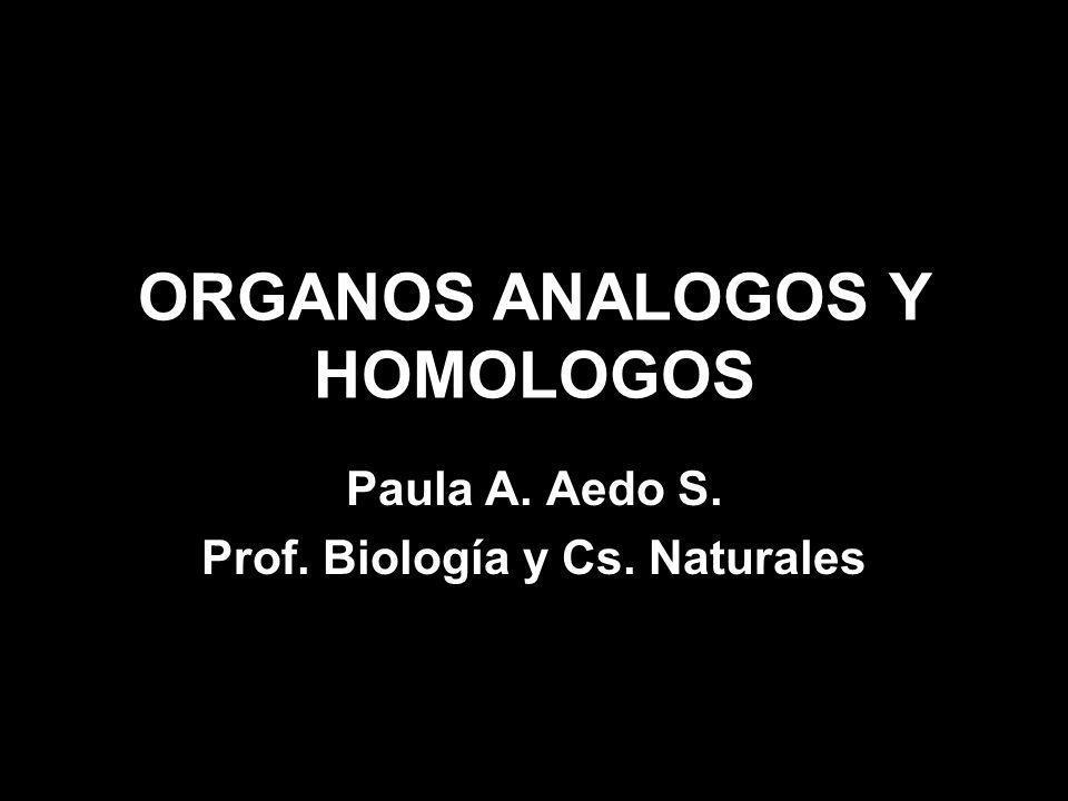 ORGANOS ANALOGOS Y HOMOLOGOS Paula A. Aedo S. Prof. Biología y Cs. Naturales