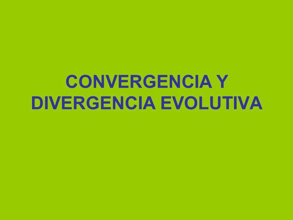 CONVERGENCIA Y DIVERGENCIA EVOLUTIVA