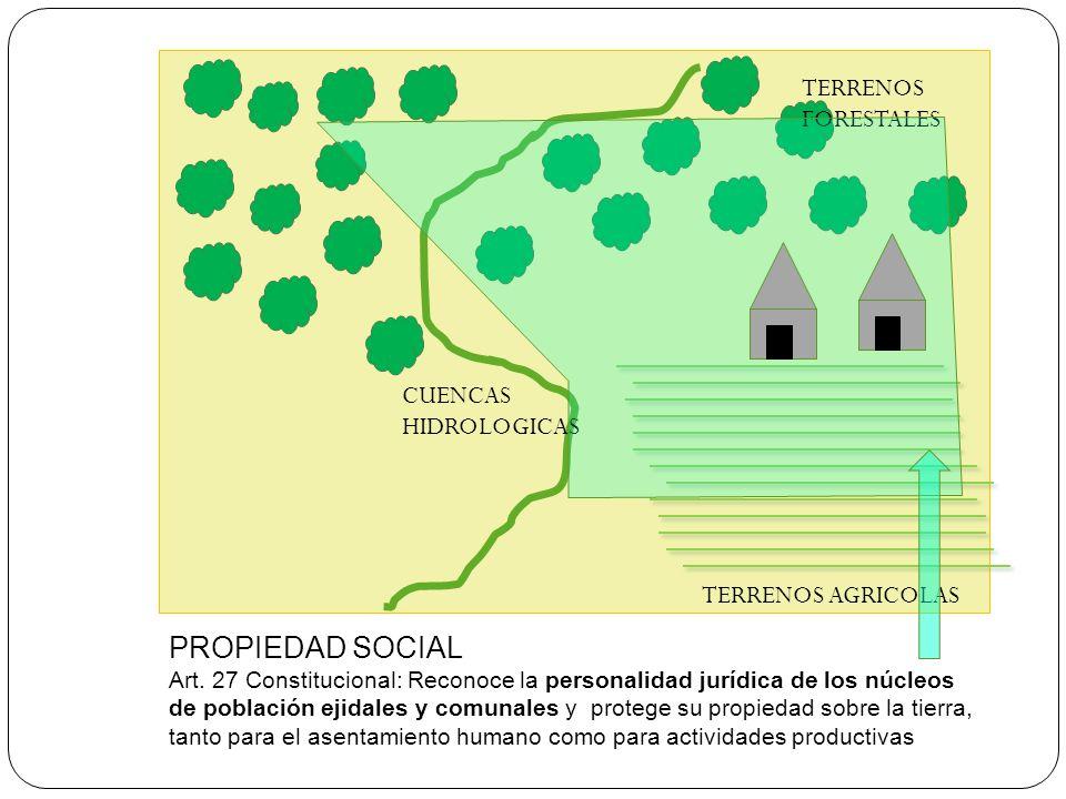 PROPIEDAD SOCIAL Art. 27 Constitucional: Reconoce la personalidad jurídica de los núcleos de población ejidales y comunales y protege su propiedad sob