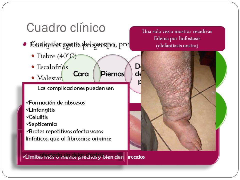 Cuadro clínico Cualquier parte del cuerpo, predominio en: Placa eritematoedematosa Caliente Roja Brillante Dolorosa Varios cm. de diámetro Límites más