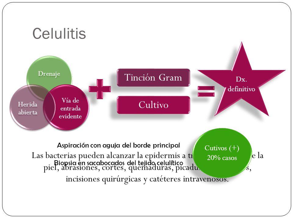 Celulitis Drenaje Vía de entrada evidente Herida abierta Tinción Gram Cultivo Dx. definitivo Las bacterias pueden alcanzar la epidermis a través de gr