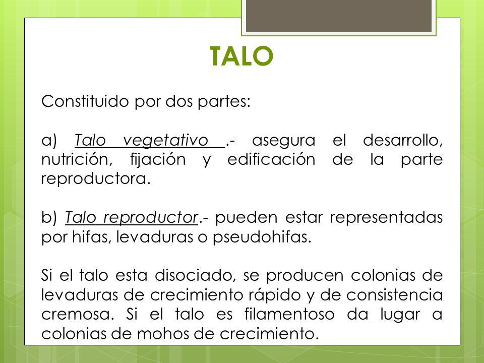 TALO Constituido por dos partes: a) Talo vegetativo.- asegura el desarrollo, nutrición, fijación y edificación de la parte reproductora. b) Talo repro
