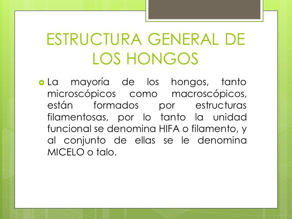 ESTRUCTURA GENERAL DE LOS HONGOS La mayoría de los hongos, tanto microscópicos como macroscópicos, están formados por estructuras filamentosas, por lo