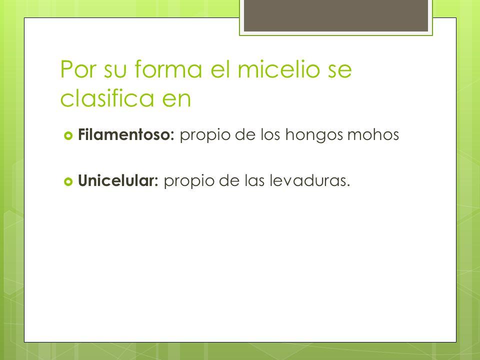 Por su forma el micelio se clasifica en Filamentoso: propio de los hongos mohos Unicelular: propio de las levaduras.
