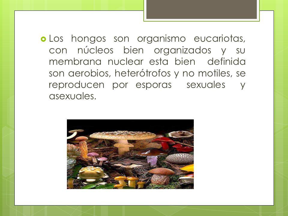 Los hongos son organismo eucariotas, con núcleos bien organizados y su membrana nuclear esta bien definida son aerobios, heterótrofos y no motiles, se