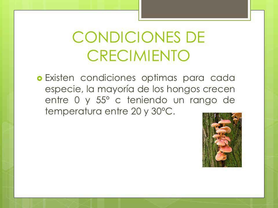 CONDICIONES DE CRECIMIENTO Existen condiciones optimas para cada especie, la mayoría de los hongos crecen entre 0 y 55º c teniendo un rango de tempera